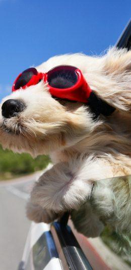 全面屏手机壁纸-宠物狗