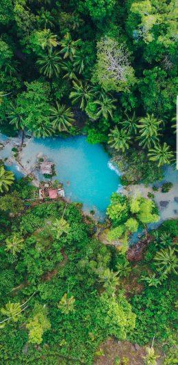 2k手机壁纸-热带雨林