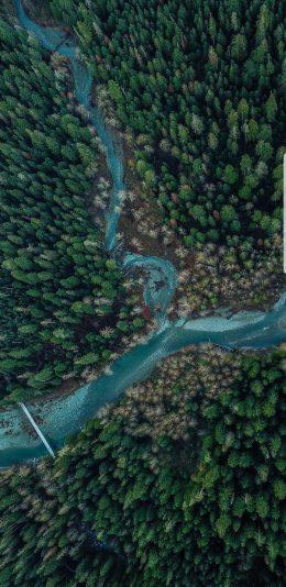 2k手机壁纸-树林