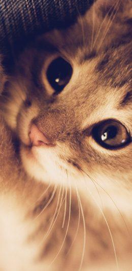 iphoneX壁纸 - 可爱的猫咪(2436 × 1125)