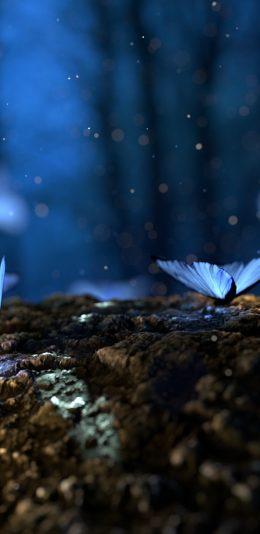 发光的蘑菇和蝴蝶