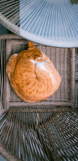 萌宠猫咪摄影高清手机壁纸