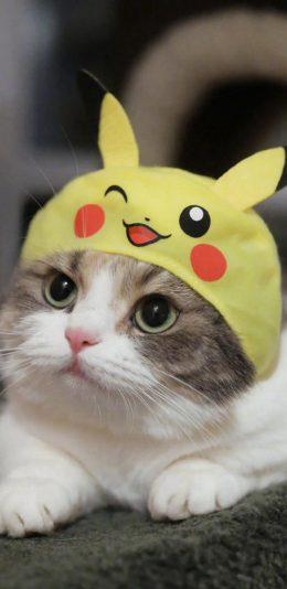 萌系可爱小猫咪手机壁纸