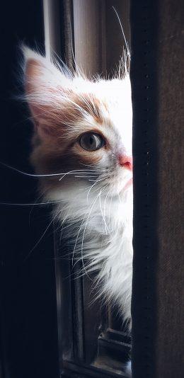 猫咪暗中观察