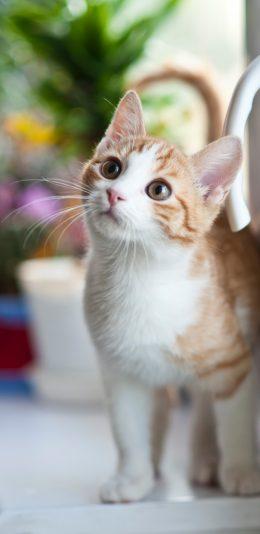 3040x1440手机壁纸推荐:呆萌的橘猫
