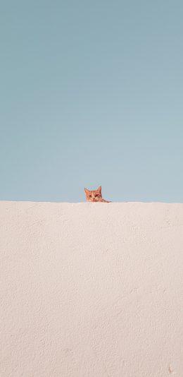 发现一只橘猫