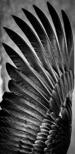 鸟类羽毛壁纸