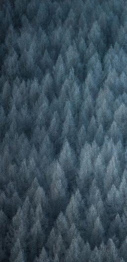 [2280x1080]OPPO color6系统壁纸下载(6)森林