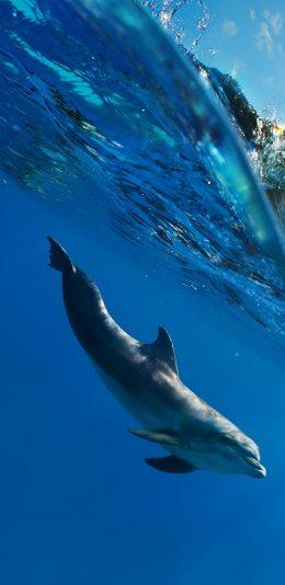 3120x1440全面屏手机壁纸-水下的海豚