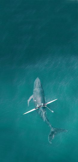 2960x1440手机壁纸|在鲨鱼上面划船