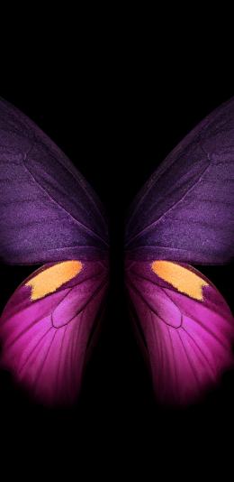 三星galaxy fold内置壁纸(7)蝴蝶