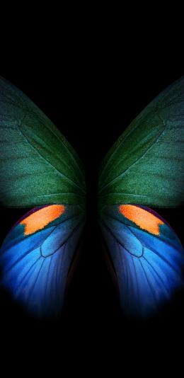 三星galaxy fold内置壁纸(6)蝴蝶