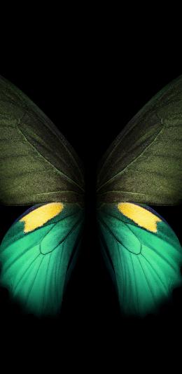 三星galaxy fold内置壁纸(3)蝴蝶