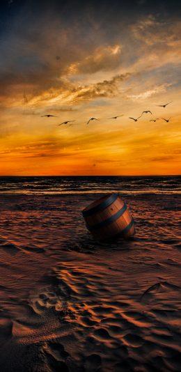 大海 海鸥 夕阳风景壁纸图片