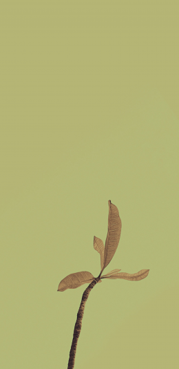 魅族18 pro手机系统壁纸(5)