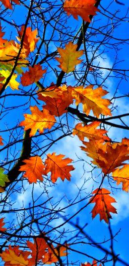 树叶 天空 风景壁纸图片