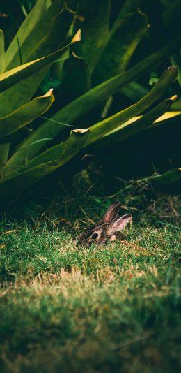 [2436x1125]兔子 草地 掩藏 绿植 苹果手机壁纸图片