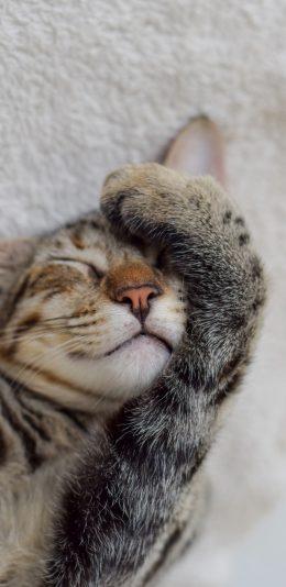 [2436x1125]猫咪 喵星人 蒙眼 可爱 宠物 苹果手机壁纸图片