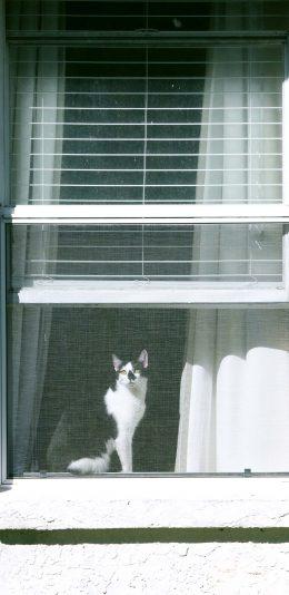[2436x1125]窗台 宠物猫 猫咪 黑白 苹果手机壁纸图片