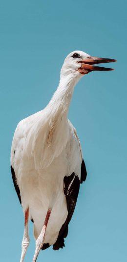 [2436x1125]飞鸟 大型 鹤 长腿 苹果手机壁纸图片