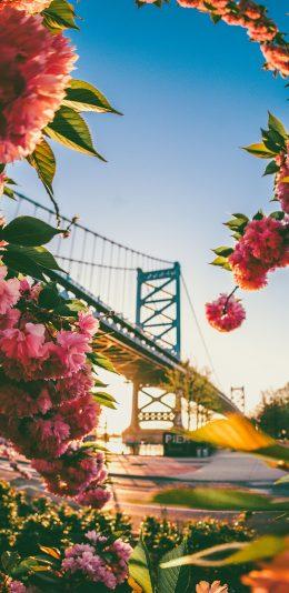 [2436x1125]桥梁 交通 鲜花 城市美景 苹果手机壁纸图片