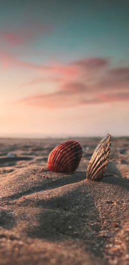 [2436x1125]贝壳 沙滩 大海 苹果手机壁纸图片