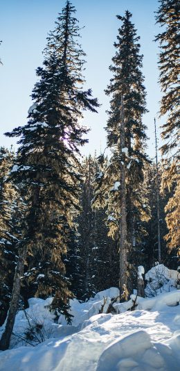 [2436x1125]雪地 美景 树木 白雪覆盖 苹果手机壁纸图片
